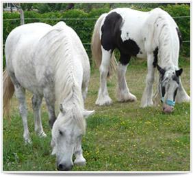 Unsere Ferienwohnung im Havelland - Ausflug mit Pferden